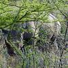 543 Black Rhino, Etosha National Park