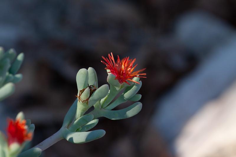 The bueaty of the Namib desert.