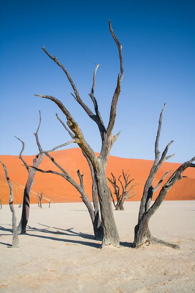 Dead trees at Deadvlei, Namib-Nauklift NP, Namibia.