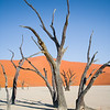 Dead trees at Deadvlei, Namib-Nauklift NP, Namibia.