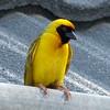 550 Weaver, Etosha National Park