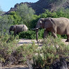 Dessert Elephants, Damaraland