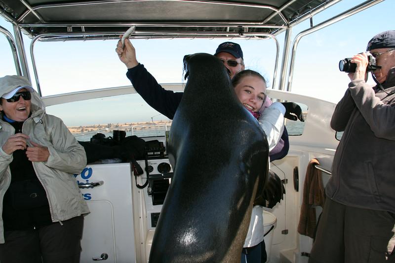 Bubbles, the wild but friendly Cape Fur Seal