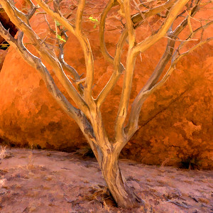 Tree near Spitzkoppe