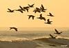 Birdsatsunset_0499