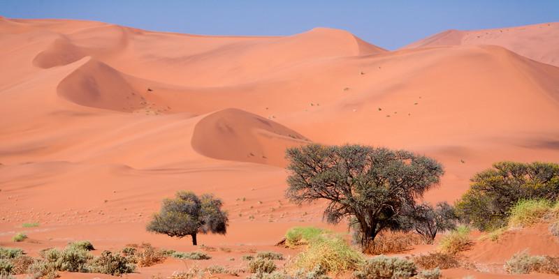 Dunes at Sossusvlei, Namib-Nauklift NP, Namibia.