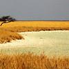 The start of the  Etosha Pan.  Namibia.