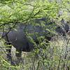 545 Black Rhino, Etosha National Park