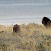603 Lions, Etosha National Parkf