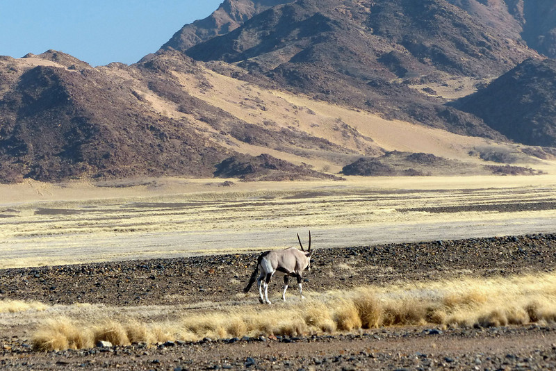 The first Oryx, Sossusvlei