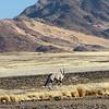 The first Oryx, Sossusvlei
