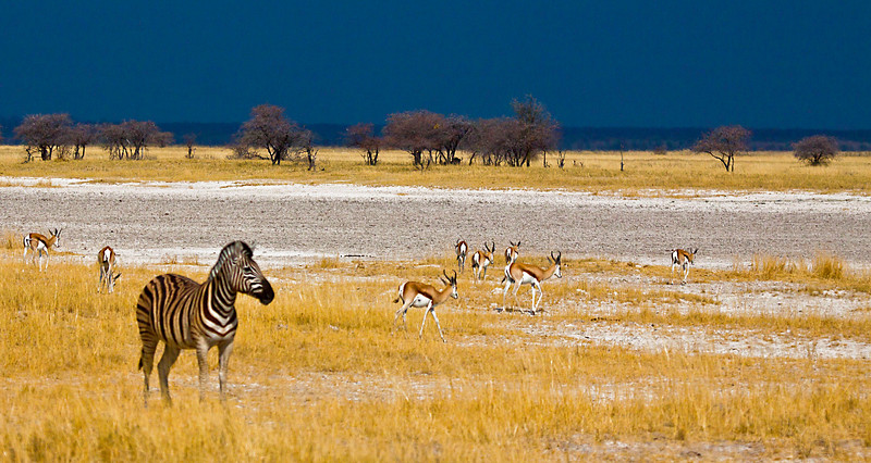 Etosha Pan, about to rain it had not rained for 8 months+.