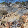 438 Petrified Forest, Damaraland