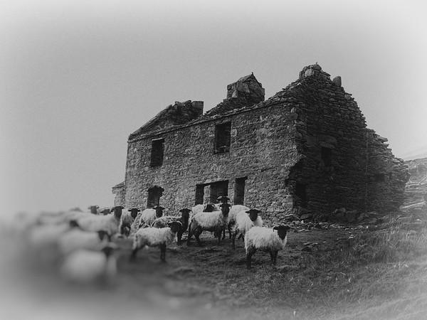 Mweelin's flock