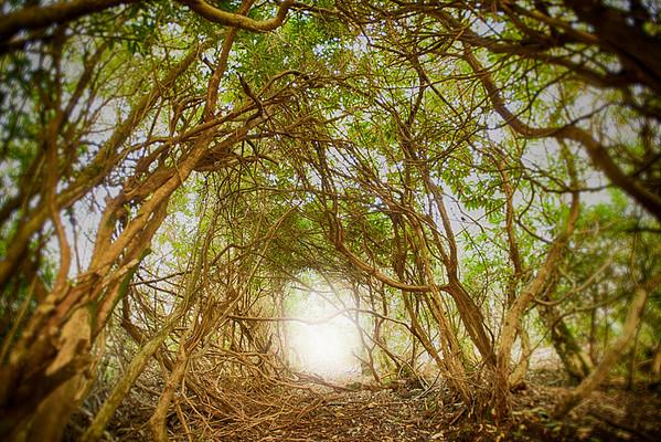 Nangle's woods