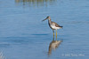 Greater-yellowlegs-with-reflection-and-shadow,-Nanuk,-Manitoba