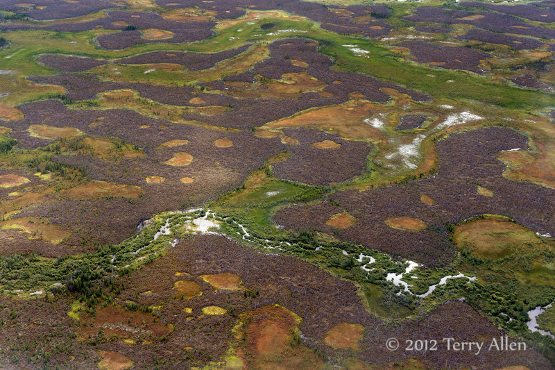 Boreal-forest-and-tundra,-northern-Manitoba