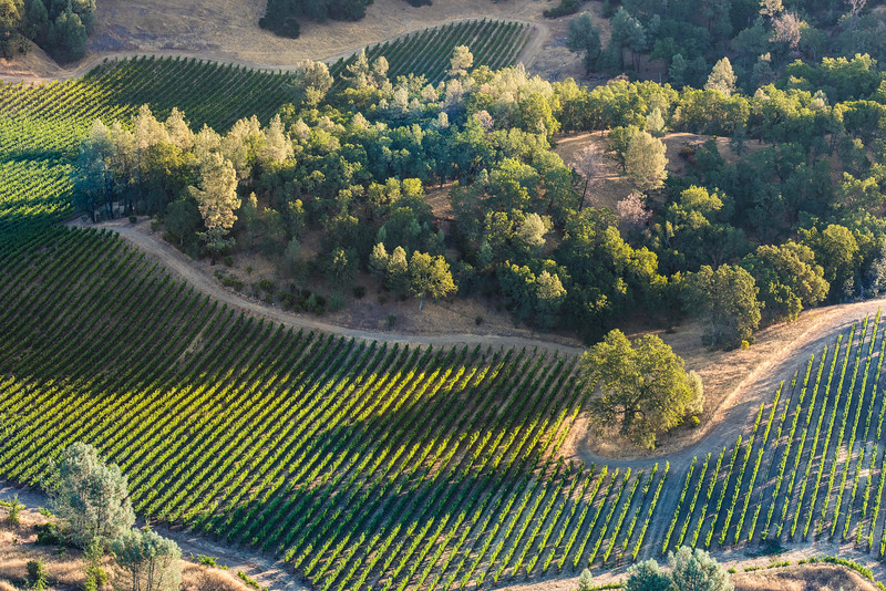 Napa Green Vineyards and Open-Space