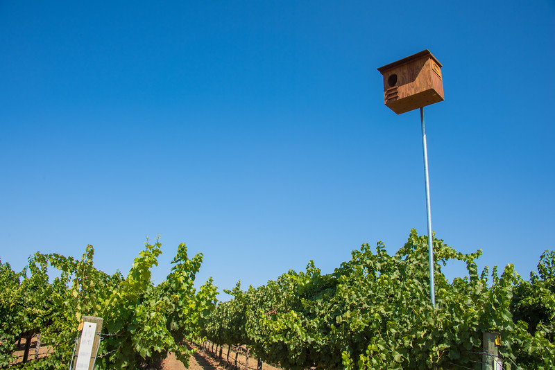 Owl boxes in the vineyard help support integrated pest management practices.  Photo courtesy of Napa Valley Vintners
