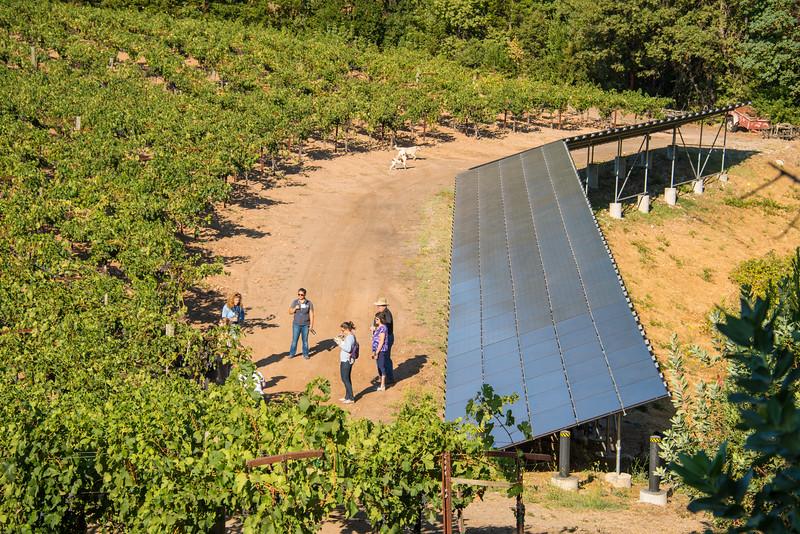 Solar arrays in a Napa Valley vineyard.  Photo courtesy of Napa Valley Vintners