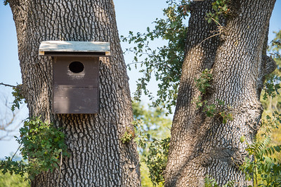 Vineyard bird boxes help support native birds and keep the ecosystem in balance.  Photo courtesy of Napa Valley Vintners