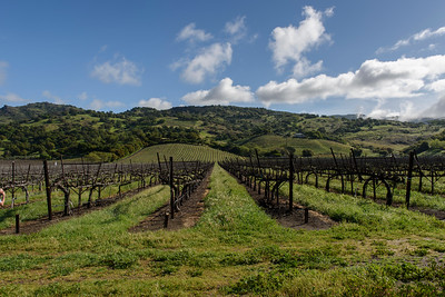 Napa Valley Landscape Workshop