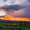 Napa Valley Sunset