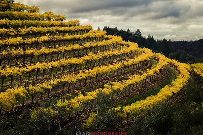 Diamond Mountain vineyard terraces above the Napa Valley