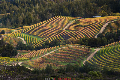 Diamond Mountain Napa Valley 1