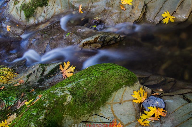 Fall color Fall streams Napa California 2