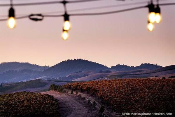 CALIFORNIE. NAPA VALLEY & SONOMA. Vignoble de la region de Carneros au sud de la Napa Valley