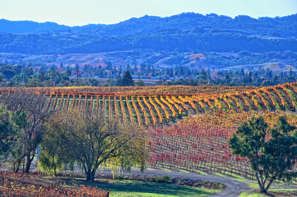 Napa Valley and Wineries through my lens