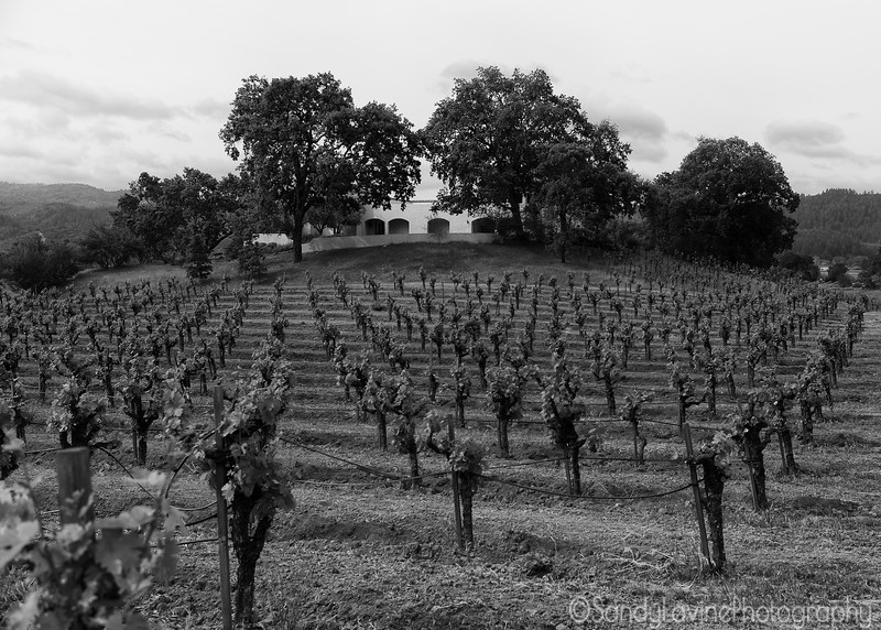 Chateau Montelena Vineyard