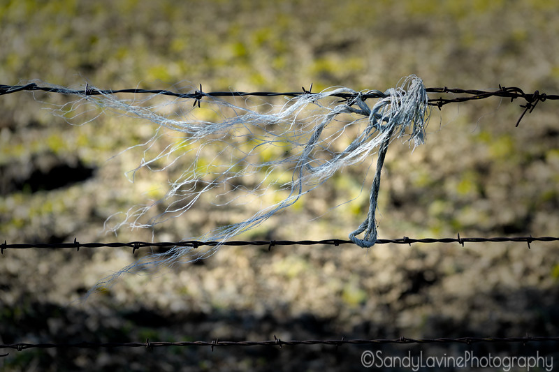 Pope Valley Barbed Wire