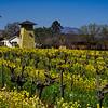 Vineyard Homestead