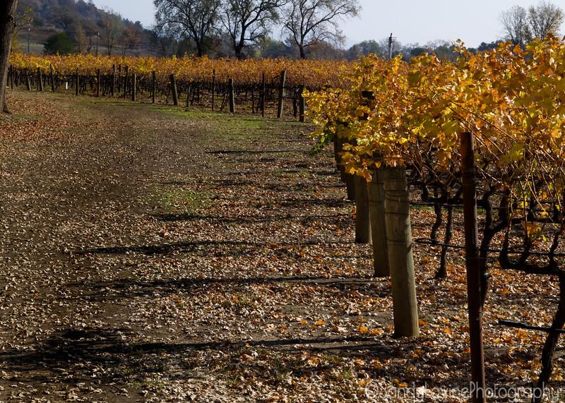 November Vineyard