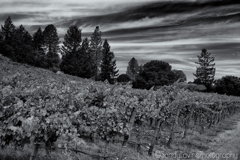 Cloudy Howell Mountain Vineyard