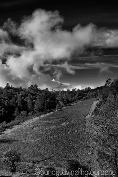 Vineyard Under the Clouds