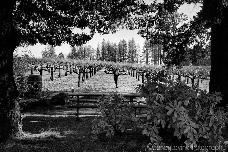 Outpost Picnic Table and the Vines