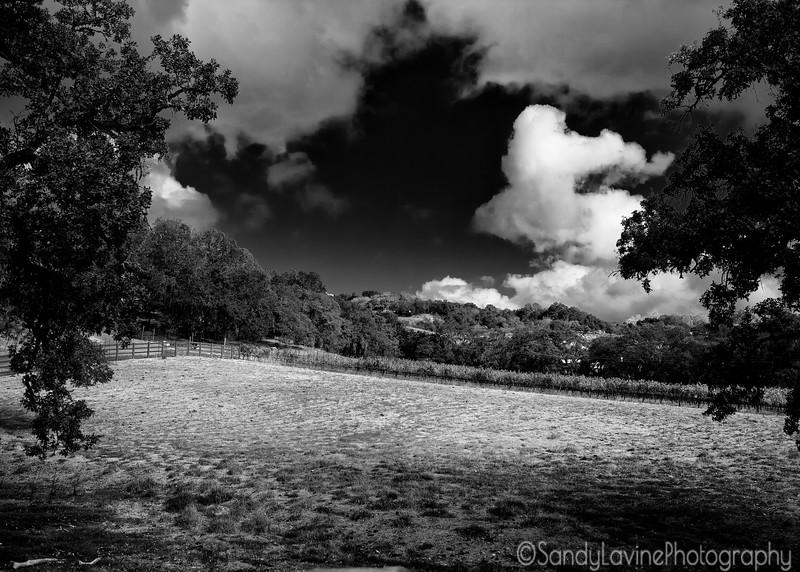 Seavey Winery Hillside
