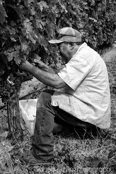 PB Hein Harvest Worker 2015