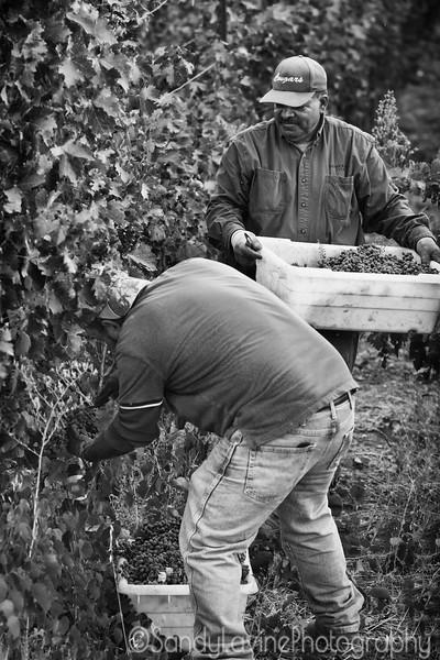 PB Hein Harvest 2016 A