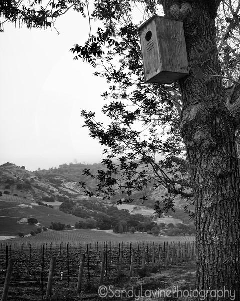 Quixote Owl Box