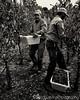 PB Hein Harvest Workers 2015