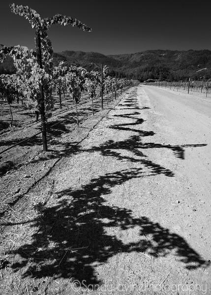 Beckstoffer Vineyard St Helena