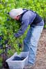 PB Hein Harvest 2016 B