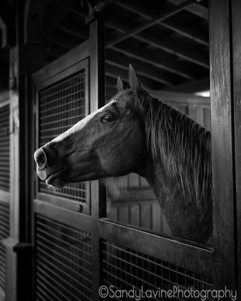 Horse, Tamber Bey Vineyards