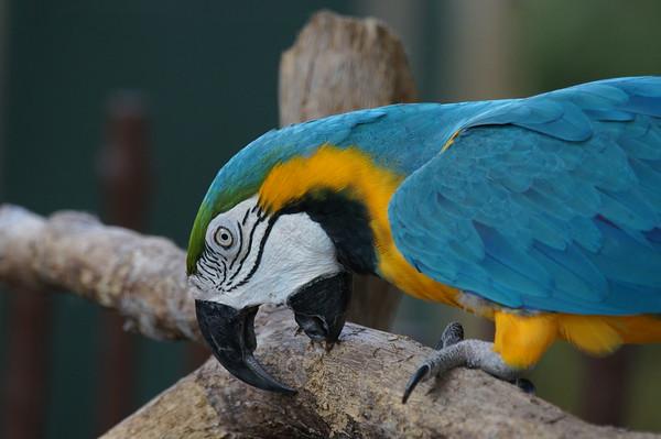 Naples zoo 41815