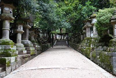 Stone lanterns leading to Kasuga Taisha