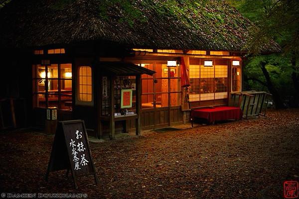 Nara Park - image copyright Damien Douxchamps